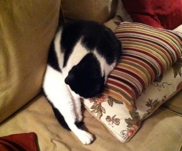 Felix napping